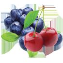 Fruit-Logo-130px-icon