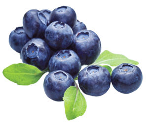 blueberry-300px